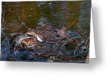 Mixed Frogs Greeting Card