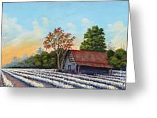 Montmorenci Cottonfield Greeting Card