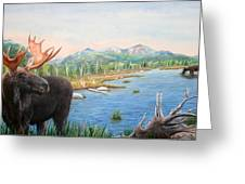 Moose At Baxter State Park Greeting Card
