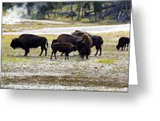 North American Female Buffalo And Her Offspring Showing Affecti Greeting Card