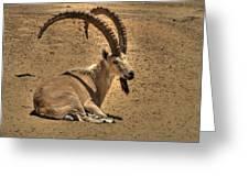 Nubian Ibex Greeting Card