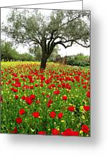 Olive Amongst Poppies Greeting Card