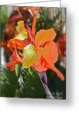 Orange Bright Greeting Card