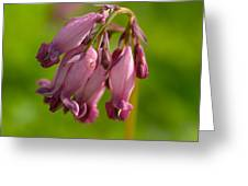 Pacific Bleeding Heart 1 Greeting Card