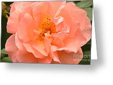 Peachy Perfection Greeting Card