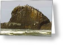 Pelicans' Rock Greeting Card