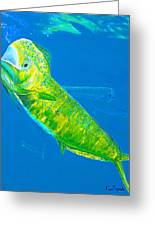 Prized Dolphin Painting Greeting Card