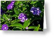 Purple Flowers In Pilgrim Place In Claremont-california Greeting Card