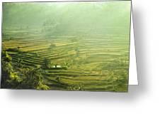 Rice Terrace  Greeting Card