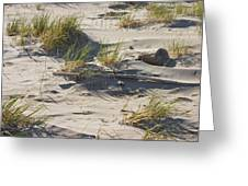 Sand And Driftwood Popham Beach Maine Greeting Card