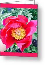 Scott' Flower2 Greeting Card