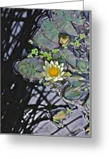 September White Water Lily Greeting Card
