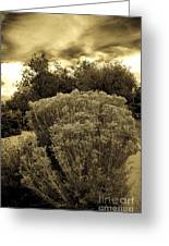 Shrub In Santa Fe Greeting Card