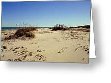 South Padre Island Dunes Greeting Card
