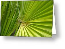 Spiny Fiber Palm Greeting Card