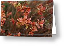 Spirea 1280 Greeting Card