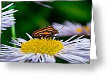 Striped Traveler Greeting Card