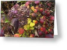 Sublime Autumn Spectrum Greeting Card