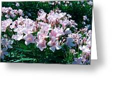 Summer Oleander Greeting Card