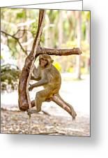 Swinging Monkey Greeting Card