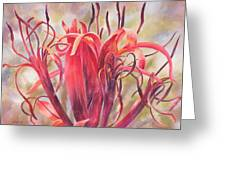 Tendrils Gymea Lily   Greeting Card