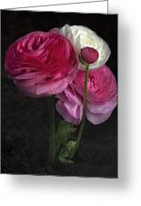 Three And A Half Blooms Greeting Card