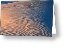 Tracks At First Light In Death Valley Greeting Card