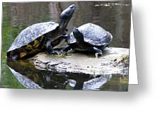 Turtles Sunning And Holding Hands Greeting Card