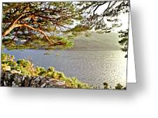 Warmth  Of The Pine Branch. Greeting Card