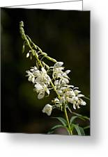 White Fireweed Greeting Card