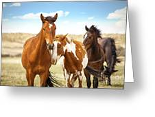 Wild Herd Of Mustang Horses Greeting Card