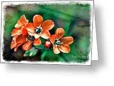 Wildflowers 5 -  Polemonium Reptans  - Digital Paint 3 Greeting Card