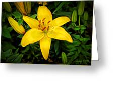 Yellow Lily Greeting Card