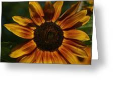 Yellow Sun Flower Greeting Card