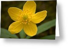 Yellow Wood Anemone Greeting Card
