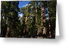Yosemite Sequia Greeting Card