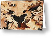 #002 Nymphalis Antiopa, Mourning Cloak Camberwell Beauty Large Butterfly Anglewing Greeting Card