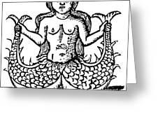 Mermaid, 1520 Greeting Card
