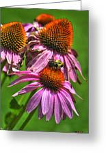 01 Bee And Echinacea Greeting Card
