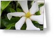 01142017075 Greeting Card