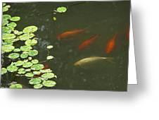 0158- Koi Greeting Card