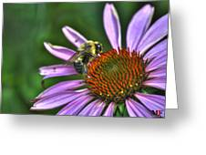 02 Bee And Echinacea Greeting Card