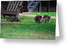 #02 Raccoon Race Greeting Card