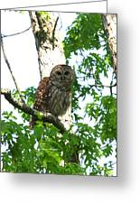 0298-001 - Barred Owl Greeting Card