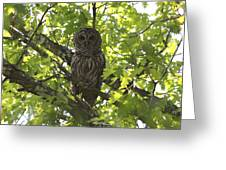 0313-010 - Barred Owl Greeting Card