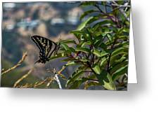 0518- Butterfly Greeting Card