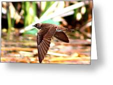 0518 - Northern Rough-winged Swallow Greeting Card