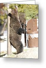 060510-grizzly Back Scratch Greeting Card