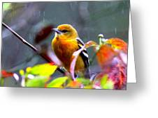 0651 - Baltimore Oriole Greeting Card