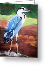 08282016 Female Blue Heron Greeting Card